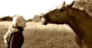horses senses