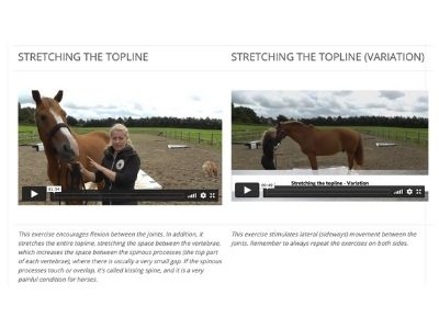 proprio training online horses